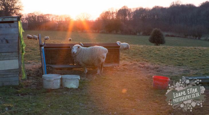 Swallowtail Hill Farm Glamping