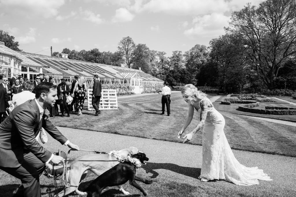 grooms takes dogs to bride in Chiswick House Gardens