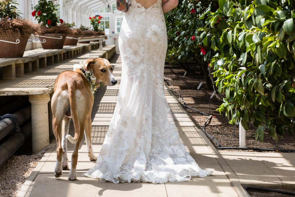 wedding dog follows bride at Chiswick House and Gardens