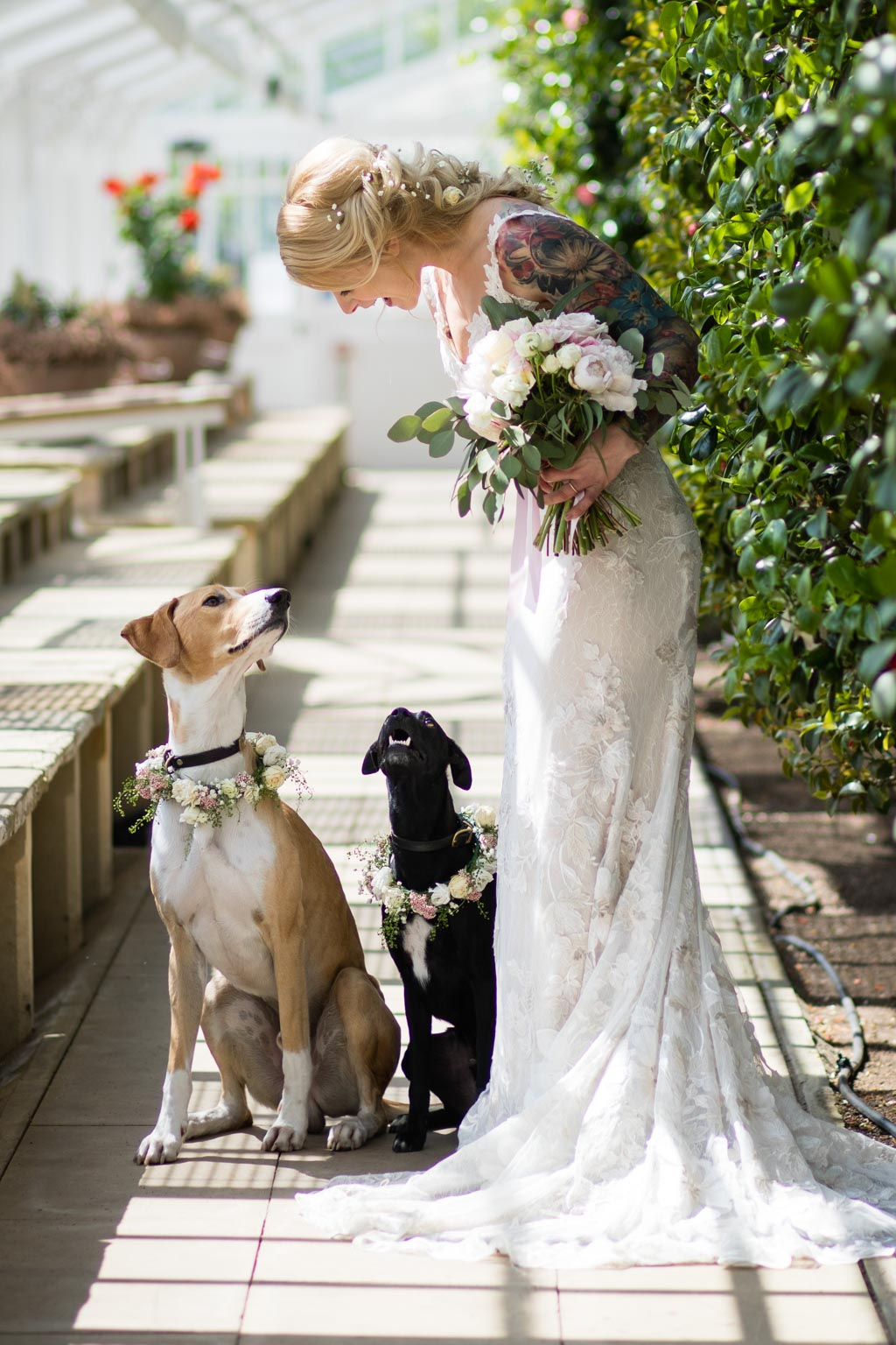 bride portrait with her dogs and bouquet